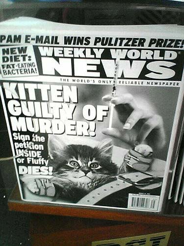 Headline: KITTEN GUILTY OF MURDER--Sign the petition inside or Fluffy DIES!